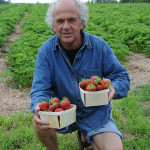 Ronald Goguen champ de fraises